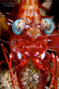 Portrait Shrimp by Iyad Suleyman