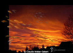 Skyfall?  (except of the fish, the evening-sky is not p... by Claudia Weber-Gebert