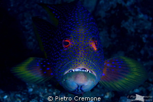 Red Eyes by Pietro Cremone