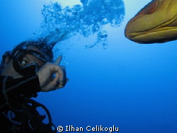 Discussion with grouper...! by Ilhan Celikoglu