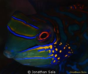 manda portrait by Jonathan Sala