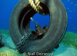 TYRED OF LION ABOUT by Niall Deiraniya