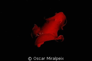 """Spanish dancer"" DANCING in the night by Oscar Miralpeix"