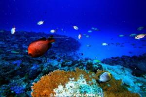 Turtle Bay -Balaclava -Republic Of Mauritius Canon 7D by Linley Jean-Yves Bignoux