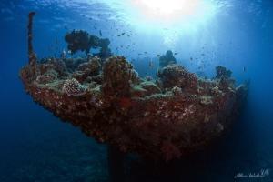 "Image taken during a dive on the wreck named ""Kingston"", ... by Allen Walker"