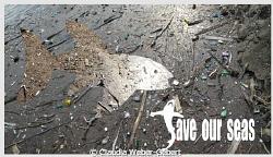 Save our Seas II by Claudia Weber-Gebert