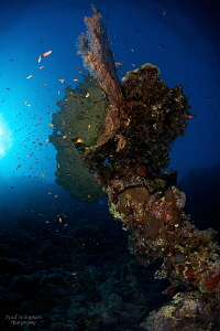 Big u/w Tree in 20m depth by Iyad Suleyman