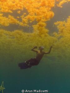 Weed line fun. SeaLife Dc1000 by Arun Madisetti