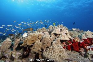 Hawaiian Reefscape by Stuart Ganz