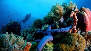 UW scenery with diver by Iyad Suleyman
