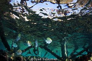 Under the Jetty by Iyad Suleyman