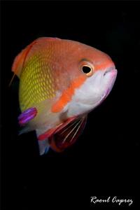 Rainbow friend by Raoul Caprez