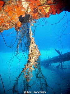 From under the wreck of the Hilma Hooker looking out. by Lisa Hinderlider