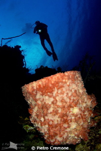 Barrel sponge with diver by Pietro Cremone