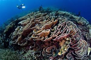 Hard Coral Wonderland by Tony Cherbas