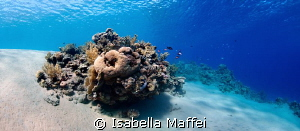 """MARSA BAREIKA""