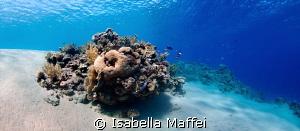 """MARSA BAREIKA"" North Egypt, Red Sea, very shallow water... by Isabella Maffei"