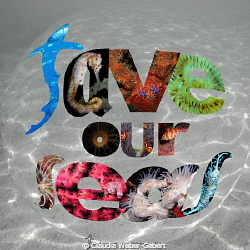 save our seas - all over the world! by Claudia Weber-Gebert