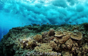 Wave on reef by Oscar Miralpeix