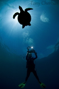 Backlight Series: #3. Turtle Shot by Tony Cherbas