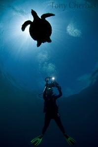 Backlight Series: #3. Turtle Shot by Tony Cherbas