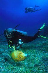 Orange Filefish and divers - Fernando de Noronha - Brazil... by Eduardo Lima