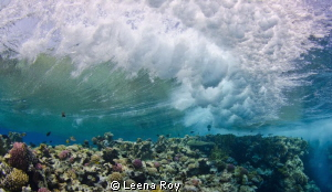 The wave by Leena Roy