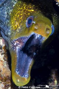 Mooray with shrimp by Pietro Cremone
