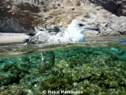 bird over/under sony compact camera with fish eye lens by Makis Markoulias