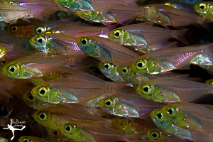 Glass-Fishes ;-) by Rico Besserdich
