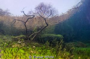 Underwater garden reaching through the surface by Elaine White