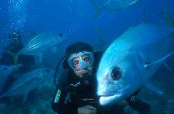 Crevalle jacks and divers Abrolhos Archipelago - Brazil... by Eduardo Lima