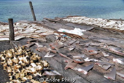 When will be stopped the finning? by Andre Philip