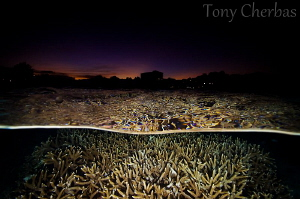 Staghorn and Skyline by Tony Cherbas