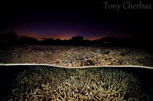 Staghorn and Skyline by Tony Cherbas