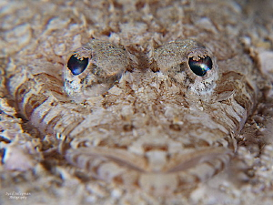 Eyes of Longsnout Flathead by Iyad Suleyman