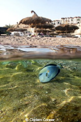 Shark's Bay in Sharm el-Sheikh. Canon G10 with Ikelite Ho... by Cigdem Cooper