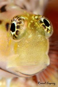 Golden eye :-) by Raoul Caprez