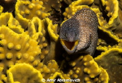 Canon G12  After A long wait for the young moray eel to ... by Amir Abramovich