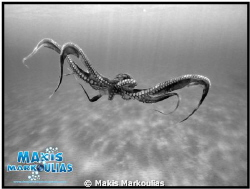 Octapus Sony Compact Camera with fish eye  extra lens by Makis Markoulias