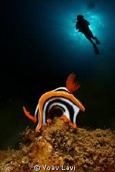 Nudi and diver double exposure by Yoav Lavi