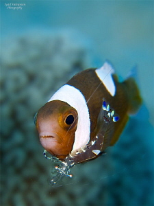 Behavior shot: cleaning. 