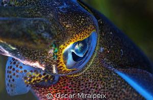Calamar close up by Oscar Miralpeix