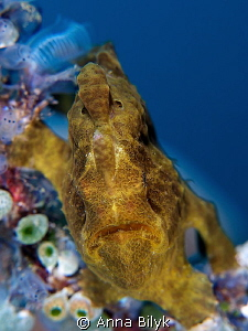 Frogfish by Anna Bilyk