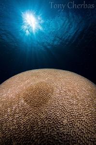 Planet 2 by Tony Cherbas