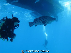 Cod under the boat and 2 divers by Caroline Baille