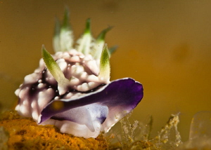 Nudi Sneer by Tony Cherbas