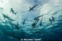 Sharks and Photographer, Gardens of the Queen Cuba