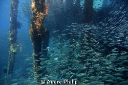 vibrant life under a jetty in Raja Ampat by Andre Philip