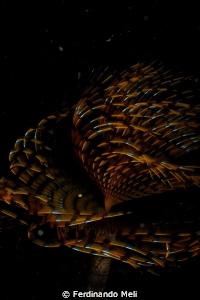 Underwater worm by Ferdinando Meli